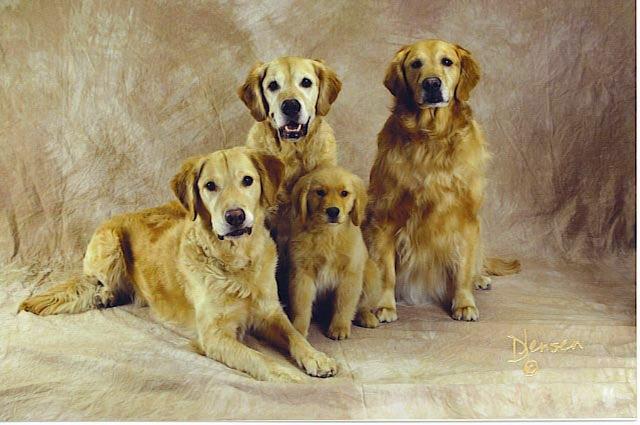 Kodi, Sami, Allie and Brinkley as a puppy