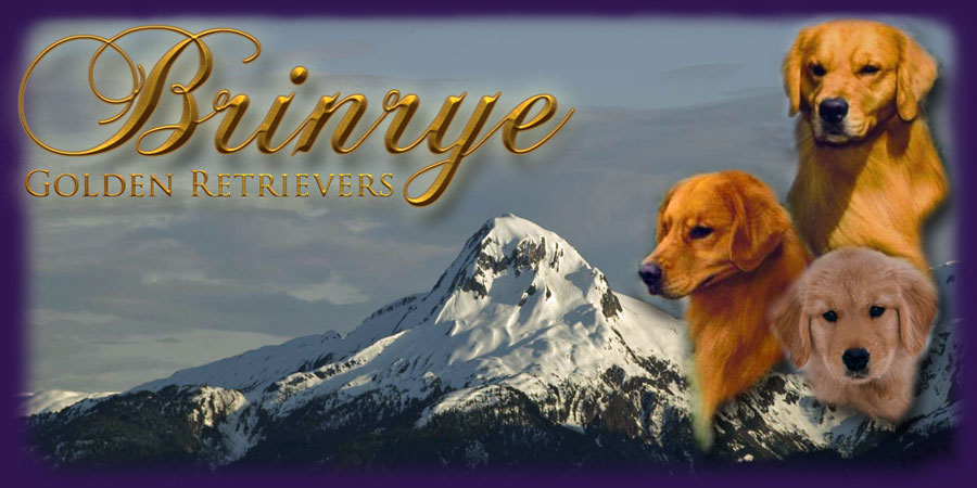 Brinrye Golden Retrievers